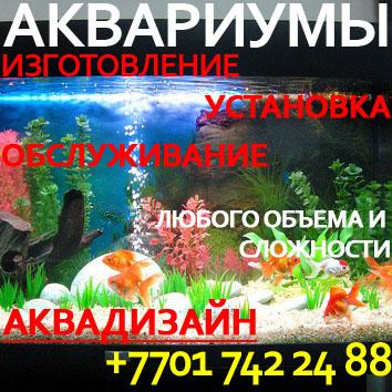 Изготовление, установка, обслуживание аквариумов любого объема и сложности. Аквадизайн.